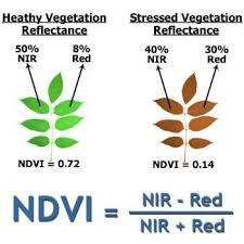 شاخص پوشش گیاهی ( NDVI )