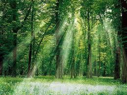 لیدار ، بررسی و شناخت ساختار جنگلها و شکل درختان